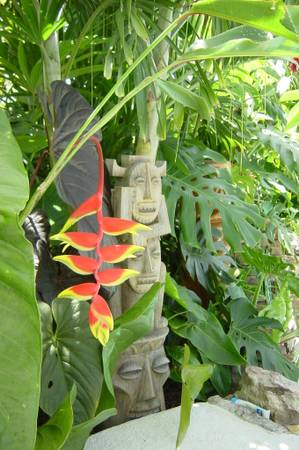 buy heliconia rostrata online or in florida nursery