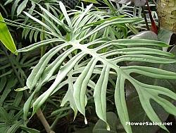 Eucalyptus In Large Vase