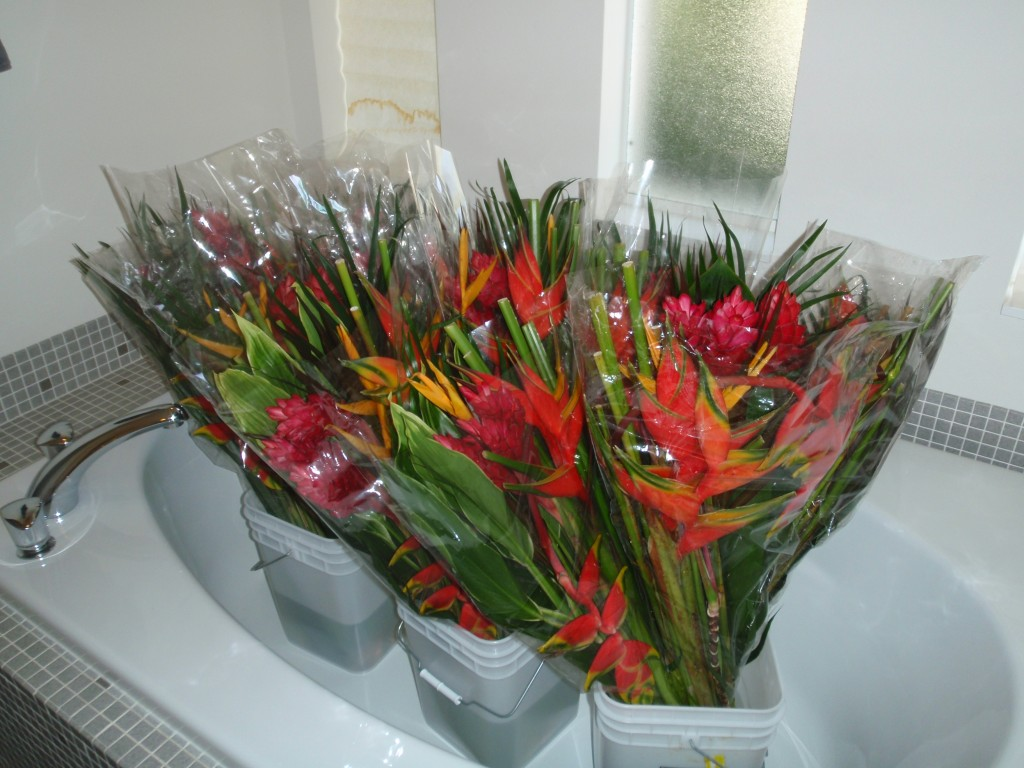 Fresh cut tropical flowers for valentines day this weeks hours 2 tropical flower bouquets izmirmasajfo Images