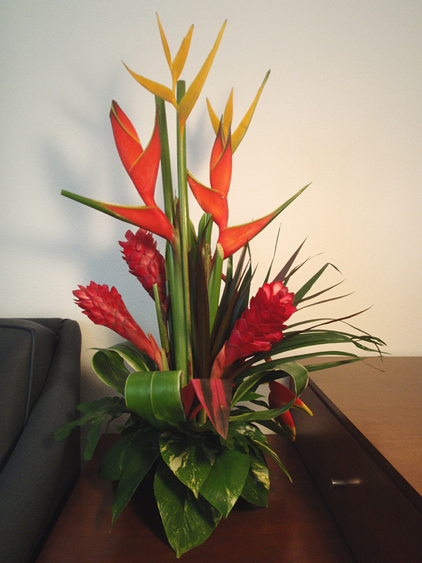 Fresh Cut Tropical Flowers For Valentine\'s Day & This Week\'s Hours 2 ...