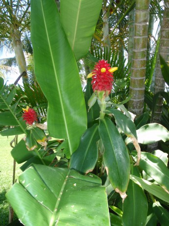What Tropical Plants Are For Sale at Exotica Tropicals ...