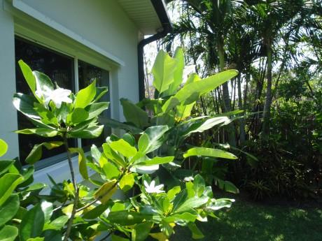 tahitian gardenia heliconia collinsiana