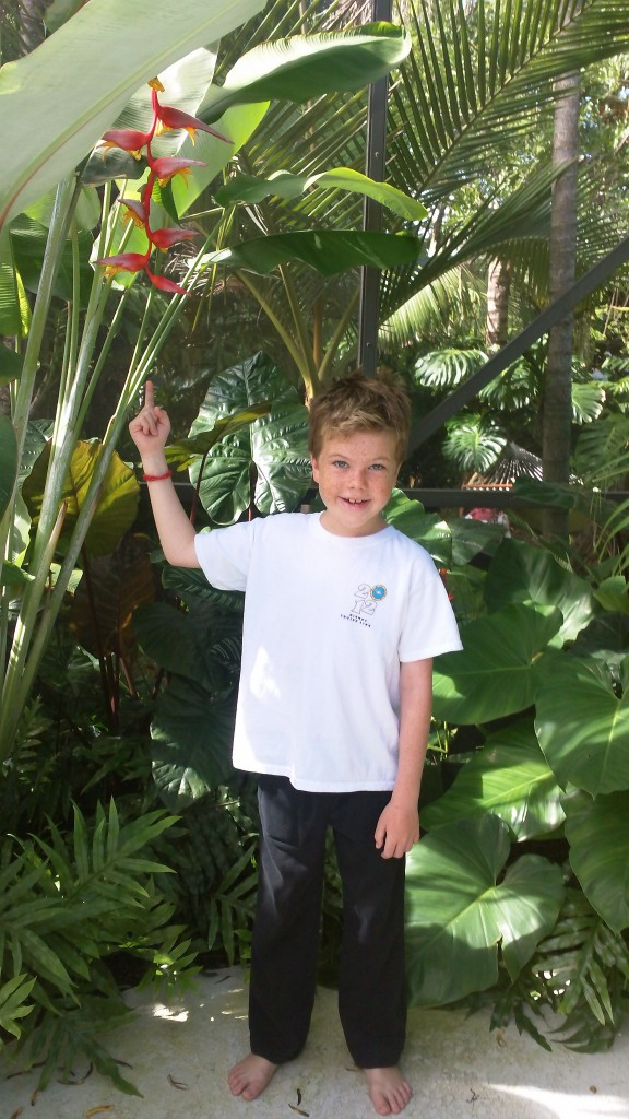 heliconia tropical plants for sale florida brevard