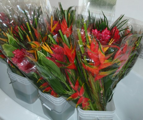 tropical heliconia ginger cut flowers bouquet arrangements  melbourne florida brevard county
