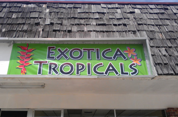 Exotica Tropicals Brevard County Tropical Plant Nursery Melbourne Vero Indian Harbour Beach