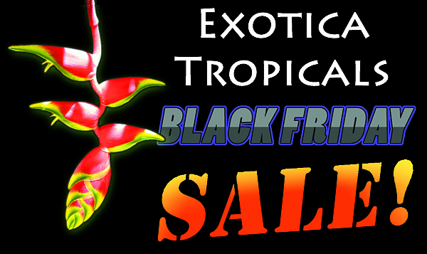Black Friday Sale discount coupon tropical plants exotica tropicals