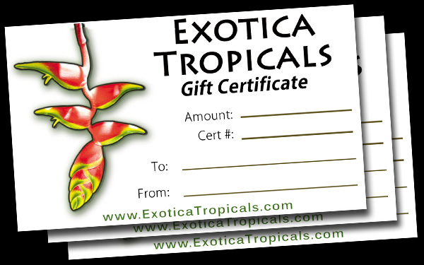 gift certificate plant nursery tropicals gift card discount sale coupon