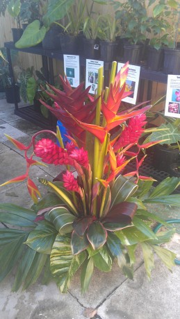 heliconia gingers tropical flowers arrangemnts wedding brevard space coast vero beach florida