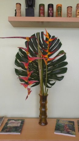 heliconia collinisiana latispatha monstera deliciosa brevard melbourne plant nursery