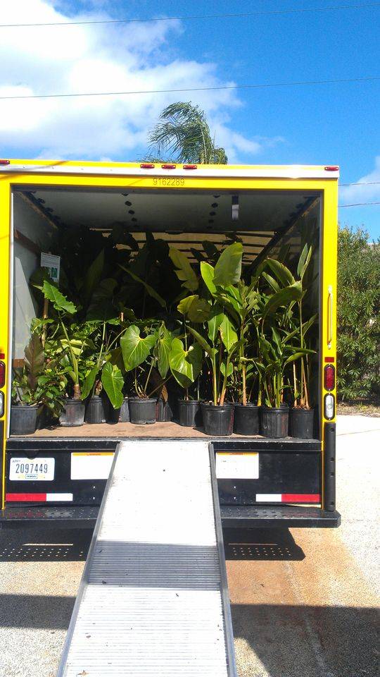 Tropical nursery truck melbourne florida brevard rare plants jungle plant show vero beach FIT