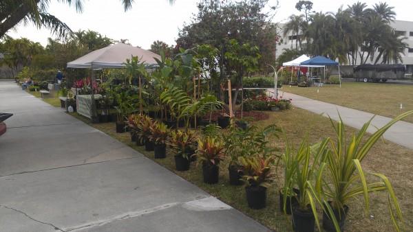 Florida Tech Plant Show Botanical Fest Tropical Plants Heliconia Alocasia Philodendron Anthurium