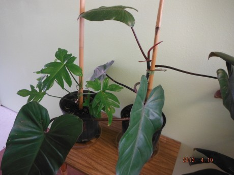 Plant Sale Amp This Week S Hours 5 1 5 5 2013 Exotica