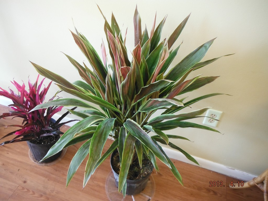 Tropical House Plants Names