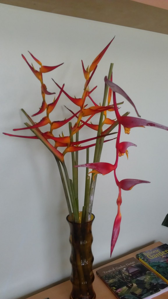 heliconia flower arrangement collinsiana latispatha red yellow gyro tropical plants houseplants nursery brevard florida melbourne cocoa beach vero