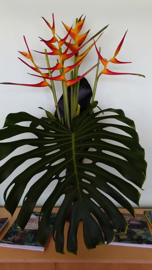 Heliconia Latispatha Red Yellow Gyro arrangement tropical nursery for sale online buy