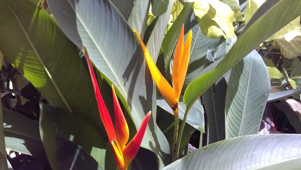Big Sale This Week Plant Photos 8 28 2013 Exotica