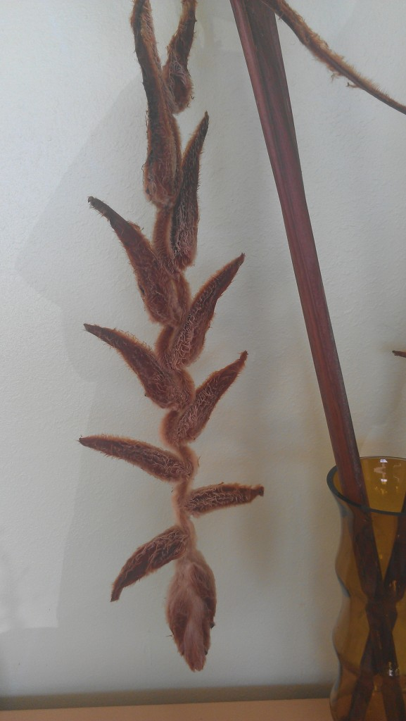 Our lobby vase this week features the dried bloom of Heliconia 'She Kong'