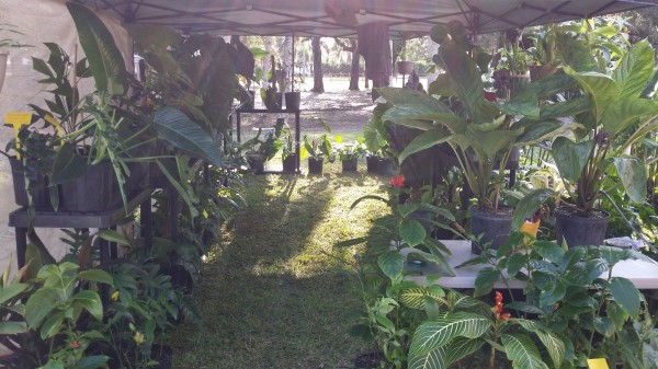 vero beach gardenfest rare tropical plants heliconia ginger trees philodendron aroids