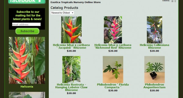 tropical plants online store heliconia philidendron rare unusual shop online
