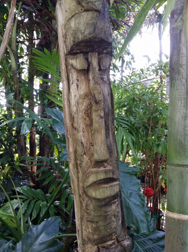 carved tiki god statue in tropical garden florida plant nursery buy online