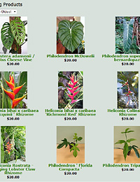 Heliconia Exotica Tropicals Tropical Plants Nursery In Brevard County Melbourne Florida E Coast Central