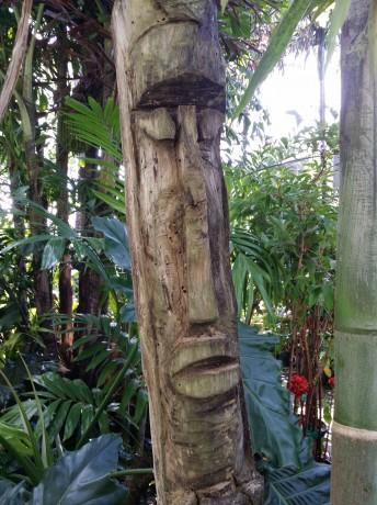 tiki carving florida tropical plant nursery buy online