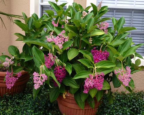 Summer Sale Has Begun 20 Off All Plants This Week