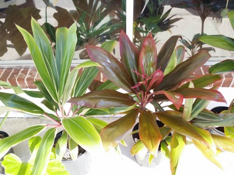 Fresh Cut Tropical Flowers | Exotica Tropicals – Tropical ...
