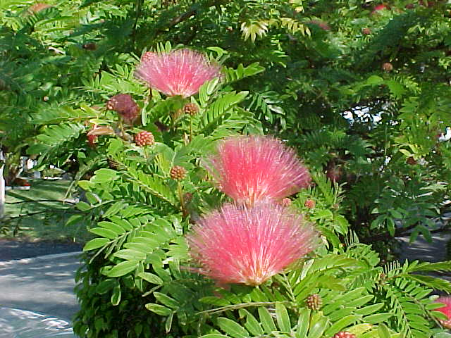 Rainbow Eucalyptus Alocasia Heliconia Ginger Rare