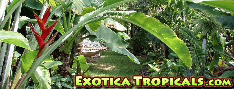 Exotica Tropicals